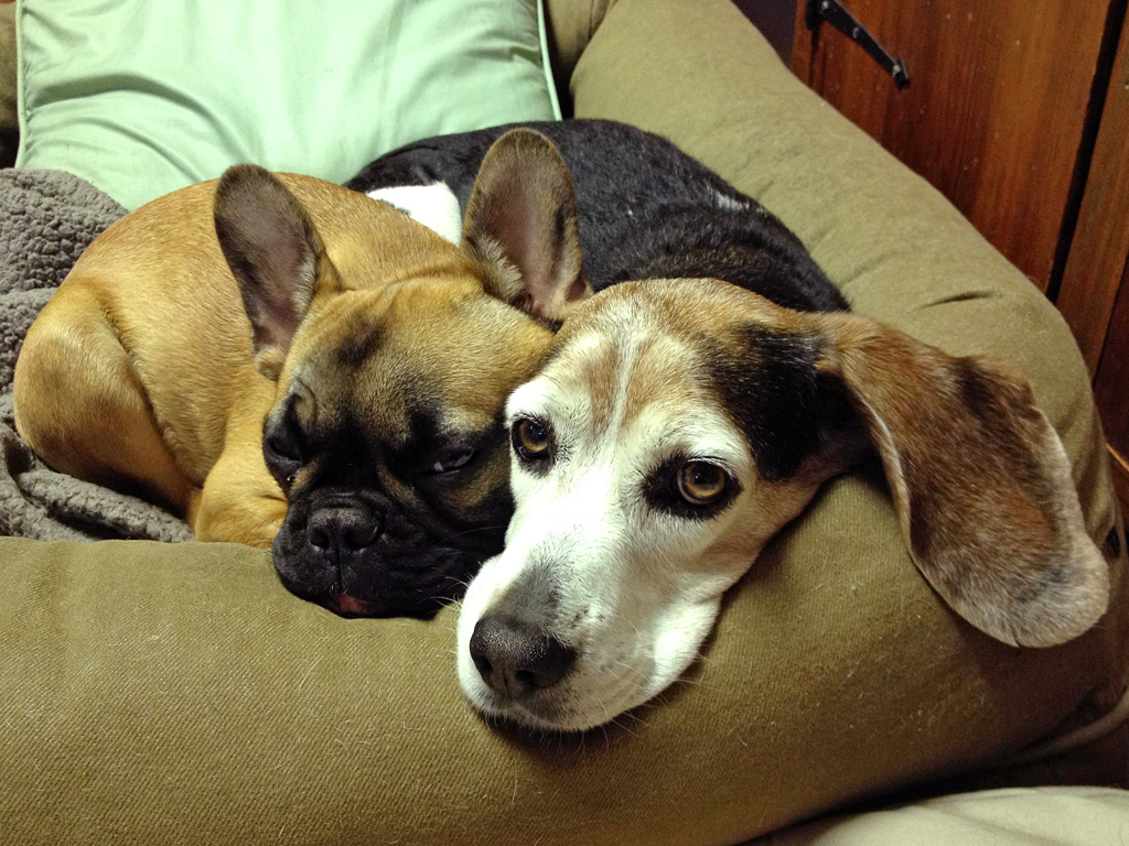 Dogs snuggling