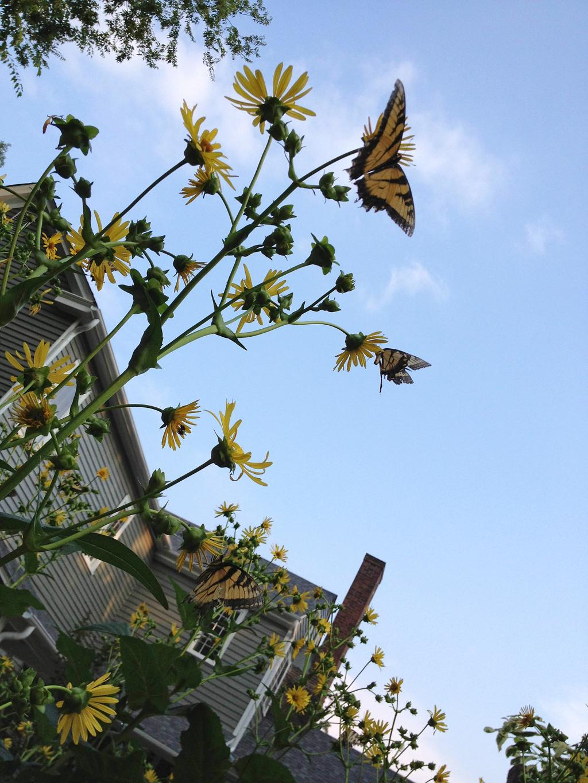 butterfly yellow flower