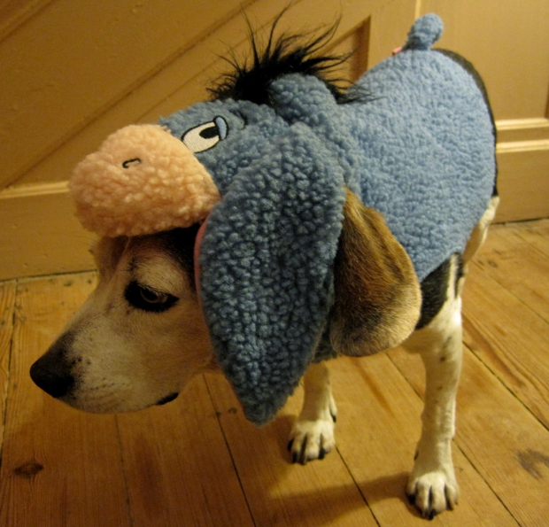 dog dressed as eyore