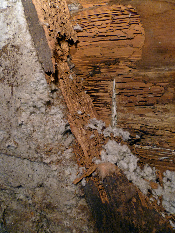 termites in siding