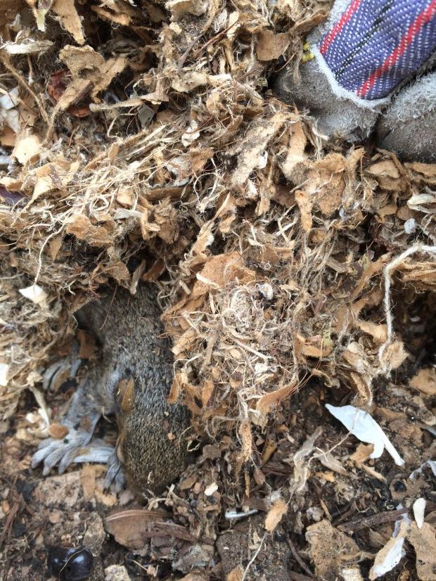 squirrel baby